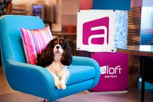 Bar - Aloft Hotel Dadeland Miami