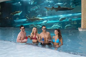 Pool - Golden Nugget Hotel & Casino Las Vegas