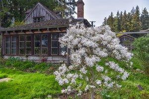 Suite - Hastings House Salt Spring Island
